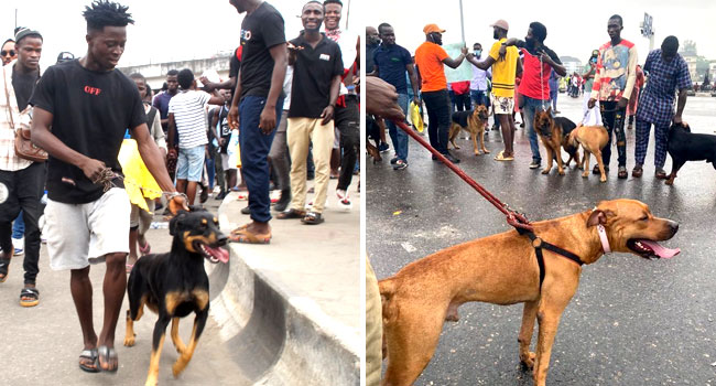 Youths Continue #EndSARS Protest In Surulere, Use Dogs As Guards