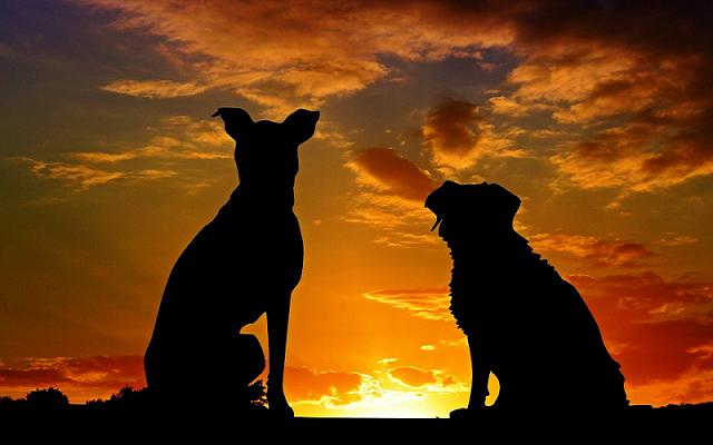 Cara Menghilangkan Najis Jilatan Anjing