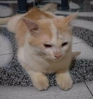 Mengatasi Kucing Muntah Cacing