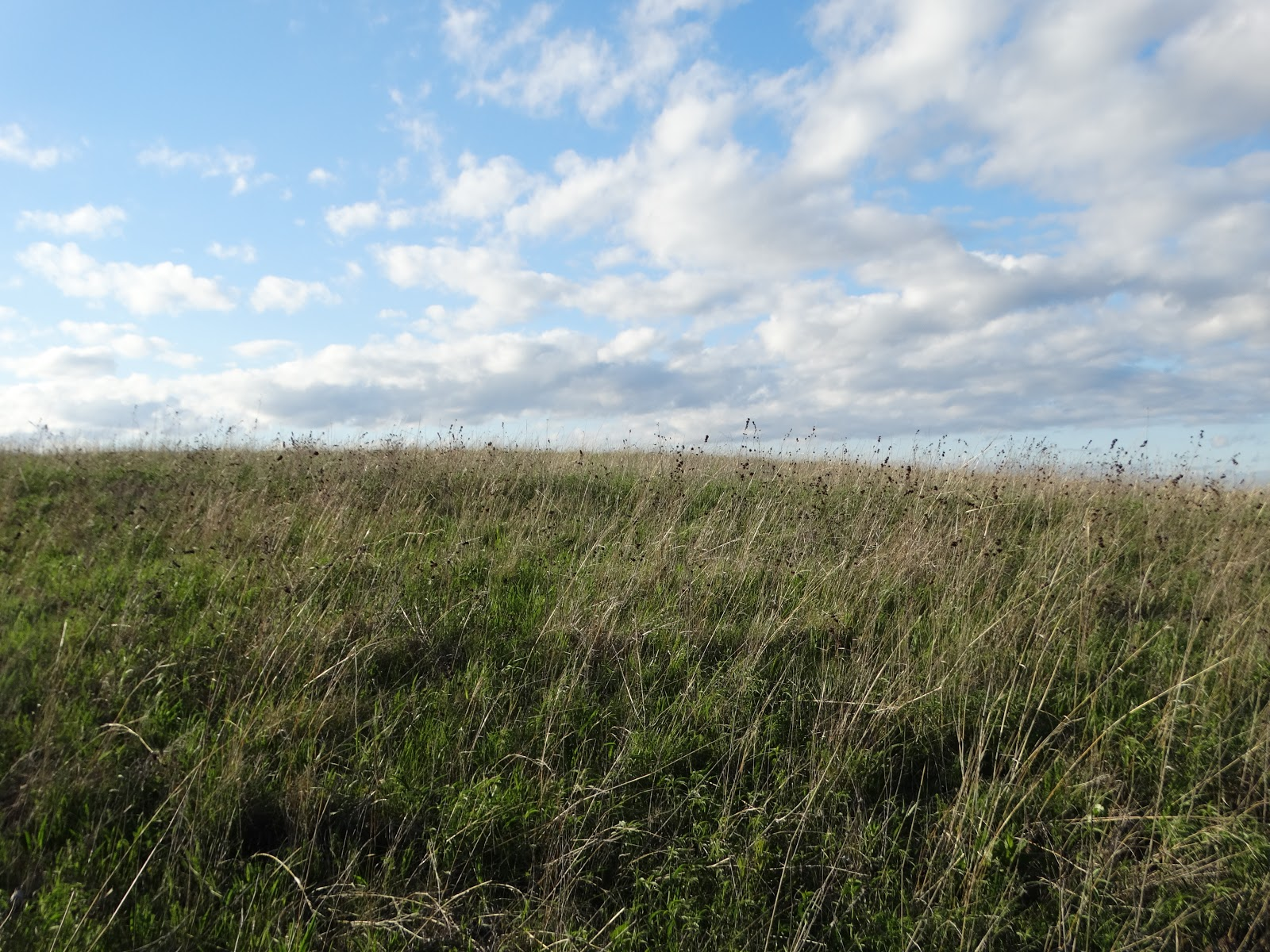 Out On The Prairie: Meanwhile, Out On The Prairie