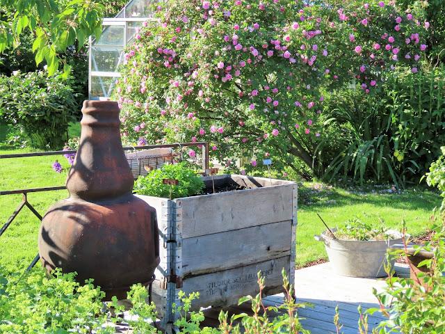 Lev landlig og fruktbart i en hage i Vaterland ved Gamlebyen - utepeisen IMG_1872 (2)-min