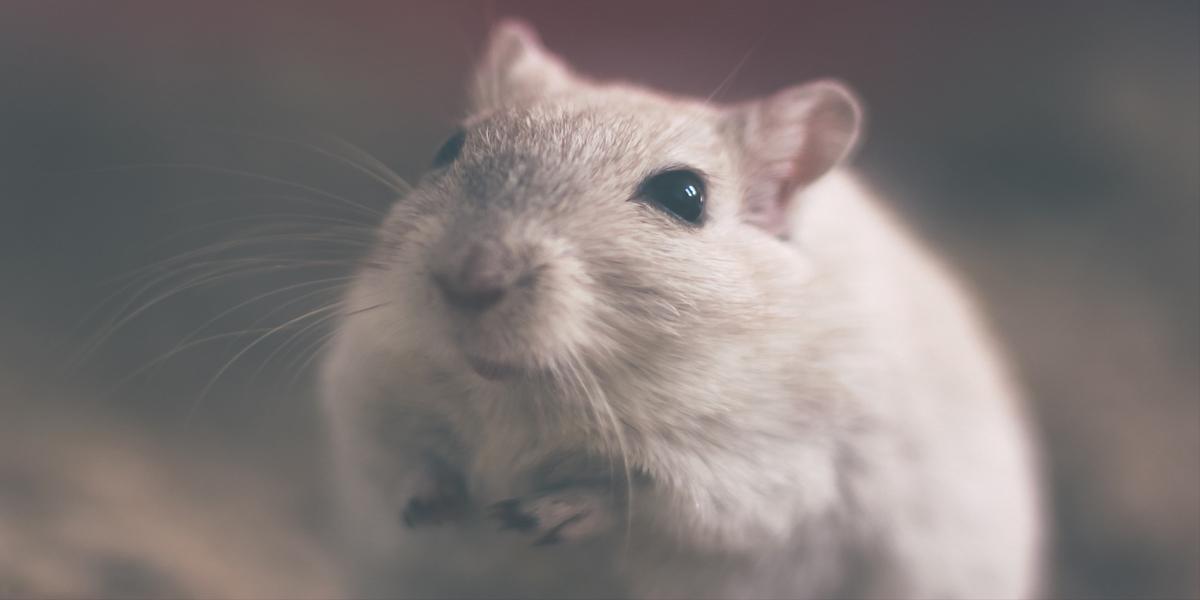 Un nuevo compuesto consigue eliminar la malaria en ratones con una única dosis