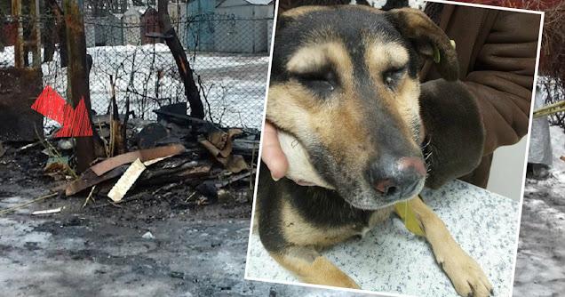 Собака спасла семью евреев от пожара: живущий по соседству араб ночью поджег их дом