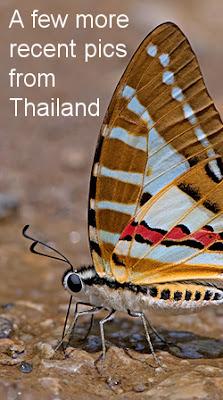 https://buttsandbugs.blogspot.co.uk/2000/05/latest-images-from-thailand-2.html
