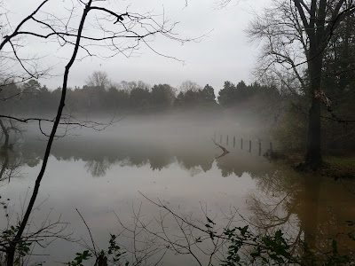 Bare trees stand by a misty, creepy lake