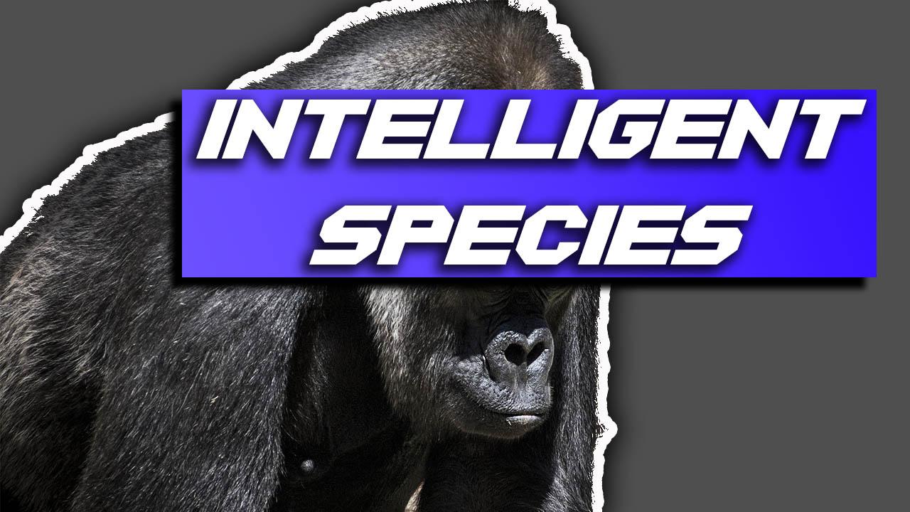 intelligent species