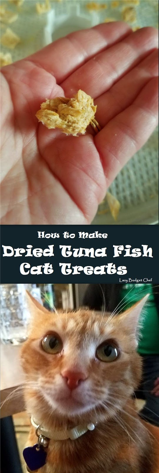 how to make quick and easy tuna fish cat treats