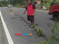 Alasan Pohon Ditanam di Jalan Nasional Pangandaran KM 10