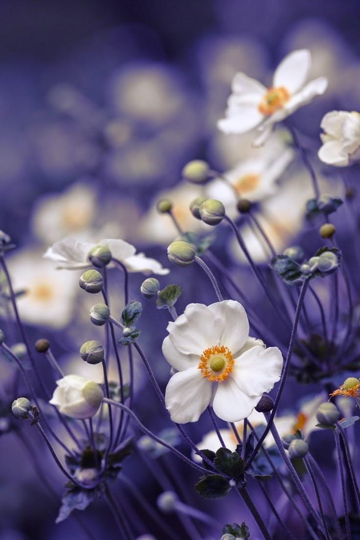 Top 5 wonderful flower | Photos Hub