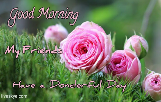 Good morning friendship Images, with HD pics liveskye