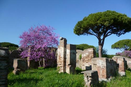 primavera ad Ostia Antica
