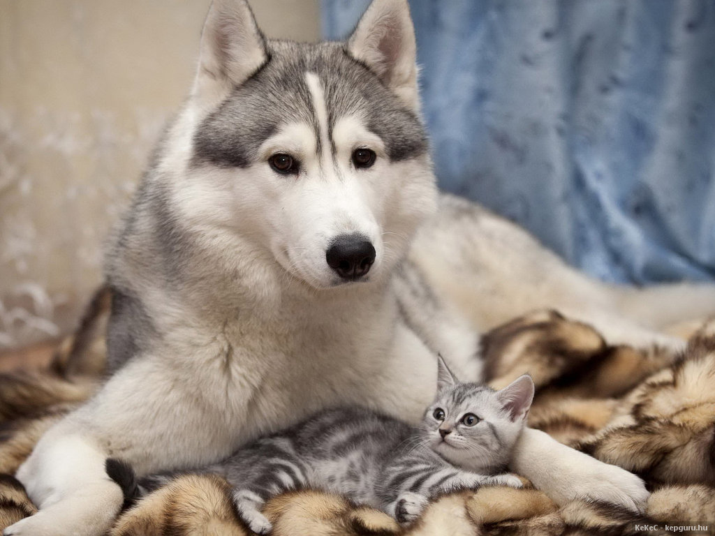 Images gratuites chiens chats - 123rf image gratuite ...