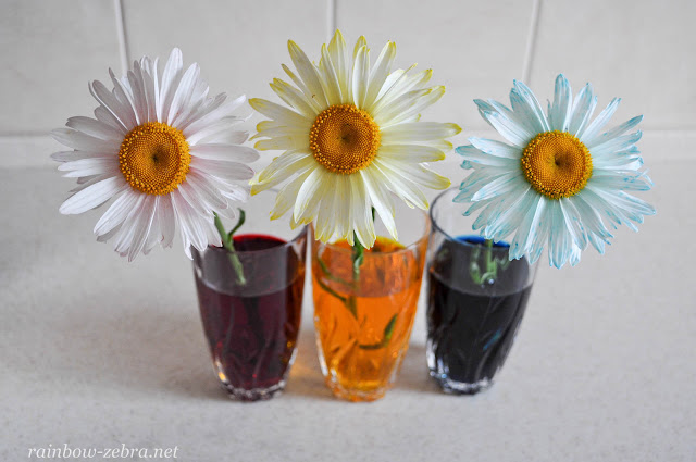 Слегка окрашеные цветы