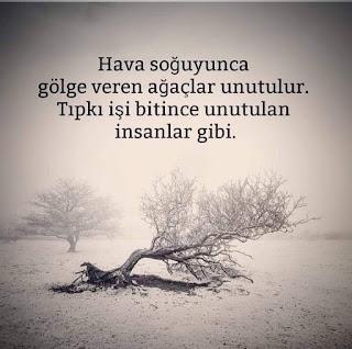 Hava soğuyunca gölge veren ağaçlar unutulur. Tıpkı işi bitince unutulan insanlar gibi. günün sözü, özlü sözler, anlamlı sözler, güzel sözler, kış, kar, fırtına, ağaç