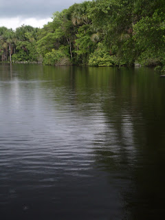 Dark Amazon waters have anacondas
