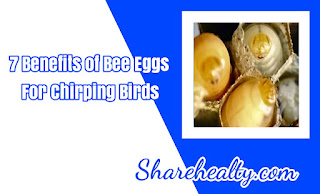 7 Benefits of Bee Eggs for Chirping Birds and Lovebirds