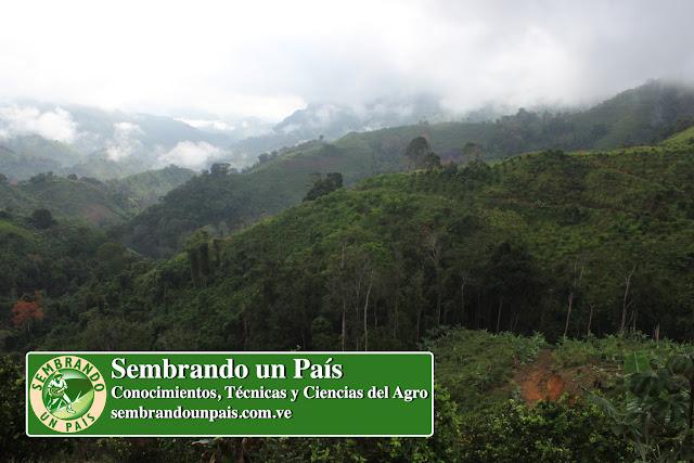 paisaje de Araira Estado Miranda