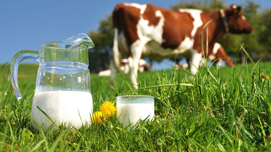 SCI-TECH : La consommation de lait cru comporte un danger sur lequel alertent les scientifiques