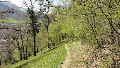 Dielenberg-Trail kurz vor Oberdorf BL