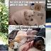 Τι ισχύει για τους σκύλους-μέρος α'...