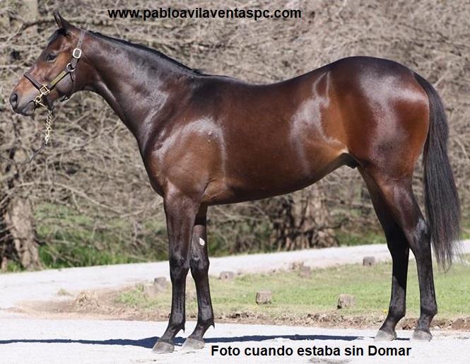 b124487bed Ventas SPC Pablo Avila: hijo de ORPEN (USA)
