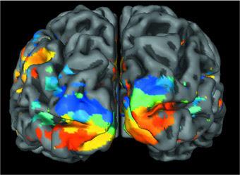 Come reagisce cervello al giudizio altrui: formula matematica