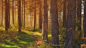 Hutan adat merupakan hutan yang letaknya berada di dalam wilayah Masyarakat Hukum Adat (MHA). Pengertian hutan adat tersebut didasari pada keputusan MK (Mahkamah Konstitusi) No. 35/PUU-X/2012. Hutan adat di Indonesia merupakan salah satu bagian dari skema perhutanan sosial yang telah termuat pada Peraturan Pemerintah Nomor 6/2007 tentang Tata Hutan dan Penyusunan Rencana Pengelolaan serta Pemanfaatan Hutan. Pengusulan wilayah hutan adat didasari dengan mekanisme tertentu yang telah termuat di dalam Peraturan Menteri Lingkungan Hidup dan Kehutanan Nomor 32 tahun 2015 tentang hutan hak. Setelah melewati mekanisme pengusulan hutan adat tersebut maka penetapan hutan adat ditentukan dari hasil alur proses verifikasi dan validasi hutan adat. Penetapan kawasan hutan adat di suatu daerah dilakukan dengan berbagai pertimbangan seperti kelayakan masyarakat hutan adat yang meliputi peran serta kewajiban dan hak yang akan diperoleh masyarakat hutan adat.
