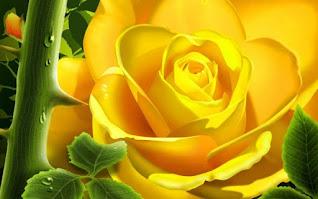 ورد جوري اصفر جميل جدا