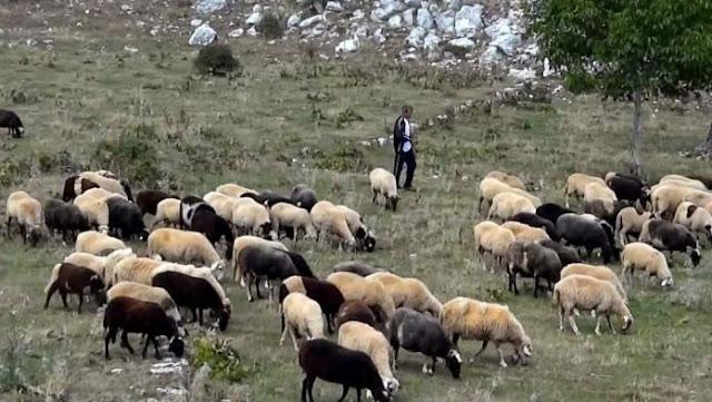 «Καμπανάκι» για τις ελληνοποιήσεις  απο το Σύνδεσμο Ελληνική Κτηνοτροφίας