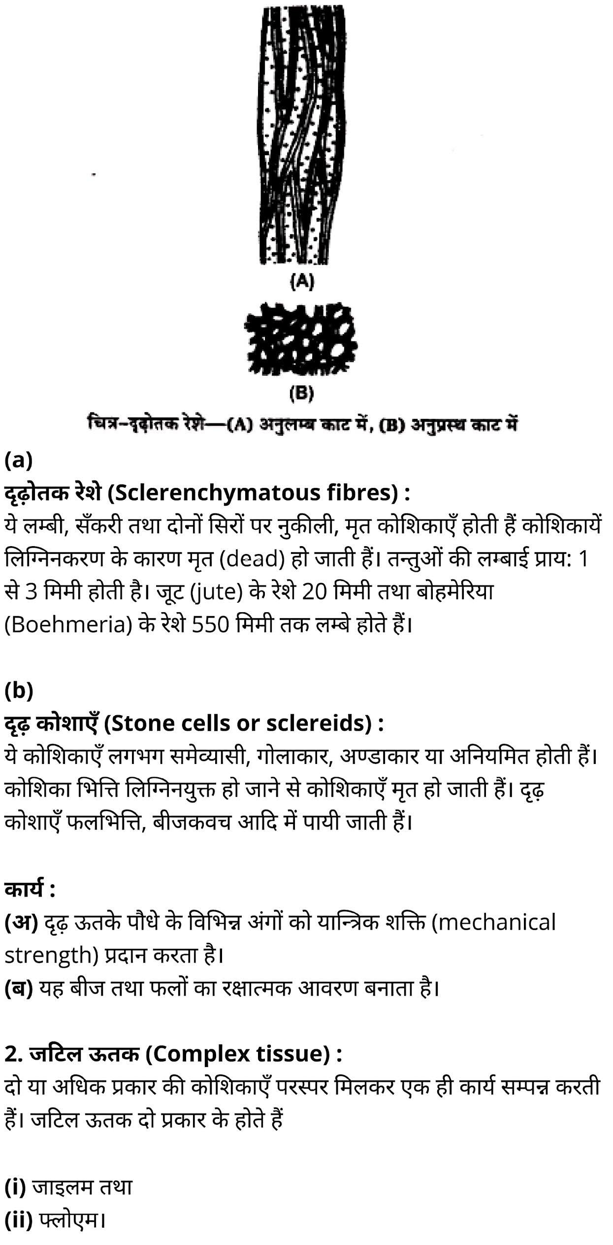 कक्षा 11 जीव विज्ञान अध्याय 6 के नोट्स हिंदी में एनसीईआरटी समाधान,   class 11 Biology Chapter 6,  class 11 Biology Chapter 6 ncert solutions in hindi,  class 11 Biology Chapter 6 notes in hindi,  class 11 Biology Chapter 6 question answer,  class 11 Biology Chapter 6 notes,  11   class Biology Chapter 6 in hindi,  class 11 Biology Chapter 6 in hindi,  class 11 Biology Chapter 6 important questions in hindi,  class 11 Biology notes in hindi,  class 11 Biology Chapter 6 test,  class 11 BiologyChapter 6 pdf,  class 11 Biology Chapter 6 notes pdf,  class 11 Biology Chapter 6 exercise solutions,  class 11 Biology Chapter 6, class 11 Biology Chapter 6 notes study rankers,  class 11 Biology Chapter 6 notes,  class 11 Biology notes,   Biology  class 11  notes pdf,  Biology class 11  notes 2021 ncert,  Biology class 11 pdf,  Biology  book,  Biology quiz class 11  ,   11  th Biology    book up board,  up board 11  th Biology notes,  कक्षा 11 जीव विज्ञान अध्याय 6, कक्षा 11 जीव विज्ञान का अध्याय 6 ncert solution in hindi, कक्षा 11 जीव विज्ञान के अध्याय 6 के नोट्स हिंदी में, कक्षा 11 का जीव विज्ञानअध्याय 6 का प्रश्न उत्तर, कक्षा 11 जीव विज्ञान अध्याय 6के नोट्स, 11 कक्षा जीव विज्ञान अध्याय 6 हिंदी में,कक्षा 11 जीव विज्ञान अध्याय 6 हिंदी में, कक्षा 11 जीव विज्ञान अध्याय 6 महत्वपूर्ण प्रश्न हिंदी में,कक्षा 11 के जीव विज्ञानके नोट्स हिंदी में,जीव विज्ञान कक्षा 11 नोट्स pdf,