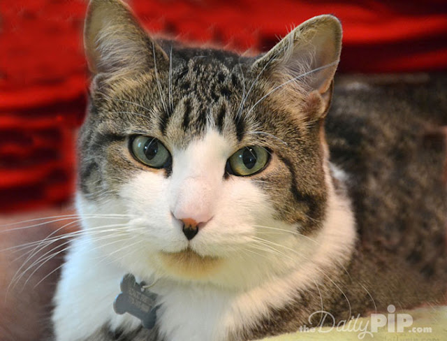 FIV cats can live with non-FIV cats and live healthy lives
