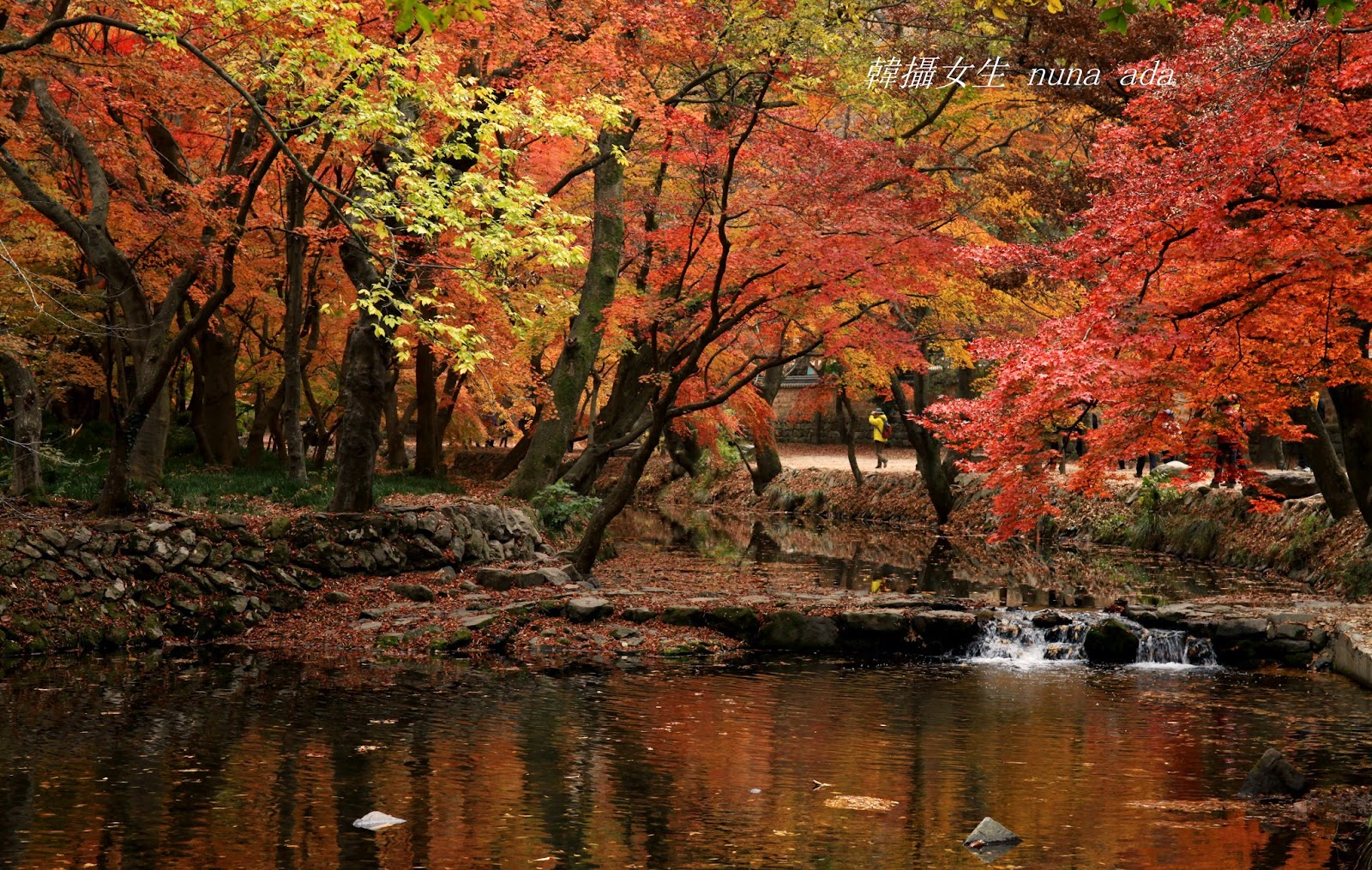 ** 韓攝女生~四季樂遊誌 : 我的五個韓國紅葉之旅 (旅行團?攝影團?自由行?)
