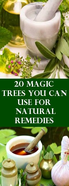 20 Magic Trees You Can Use For Natural Remedies