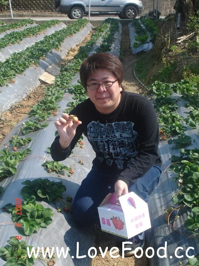 苗栗大湖-大湖草莓果園-體驗一日農夫 免費入園秤斤計價-Dahu Strawberry