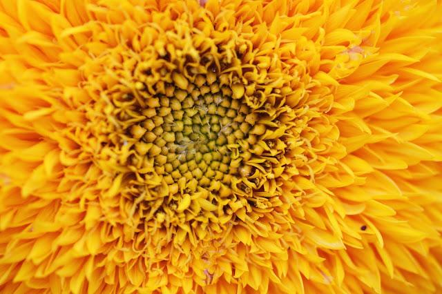I'm a sunflower, a little funny (1000 Fragen an mich selbst, 18)