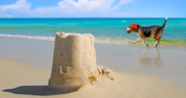 25 mejores playas para perros en Florida