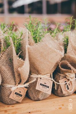 Mudinhas de ervas aromáticas