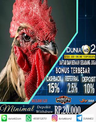 Cara Mendaftar dan Bermain Sabung Ayam di Dunia4d2