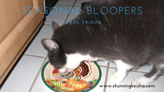 Feral Friday: Seasonal Bloopers