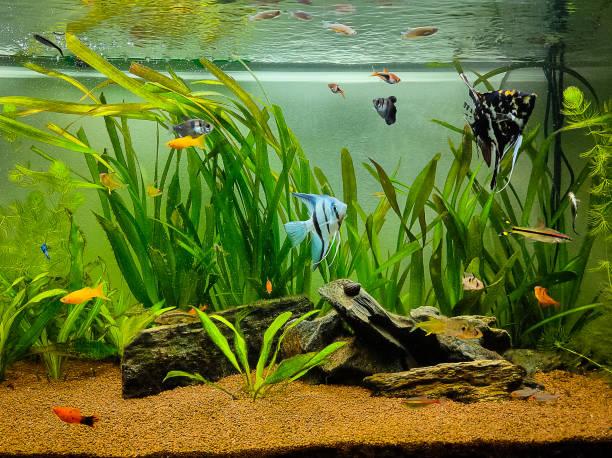 Custom Saltwater Aquarium - Aquascaping