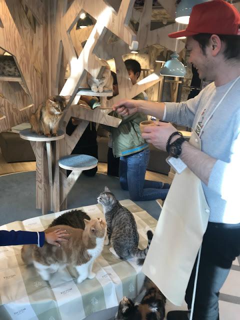 MOCHA 猫カフェ 原宿 竹下通りの店内の様子です。猫まんまをあげている様子です。