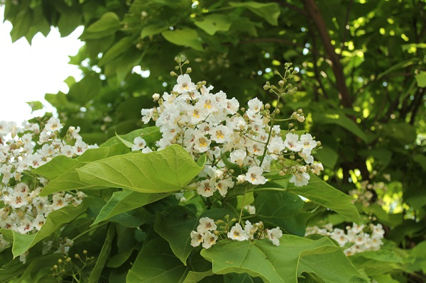 25 Gramineas Y Flores Silvestres Para Identificar Guia De Jardin