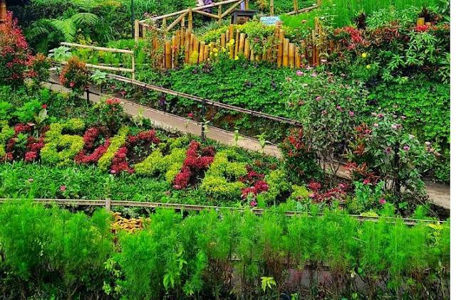 Taman Bunga Desa Wisata Pujon Kidul, Malang
