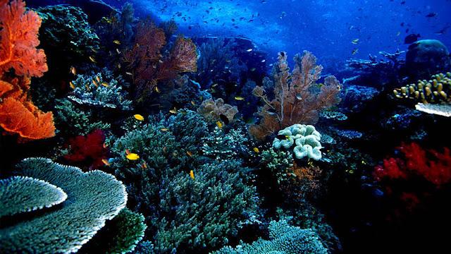 Tempat Objek Wisata di Indonesia yang Terkenal di Dunia