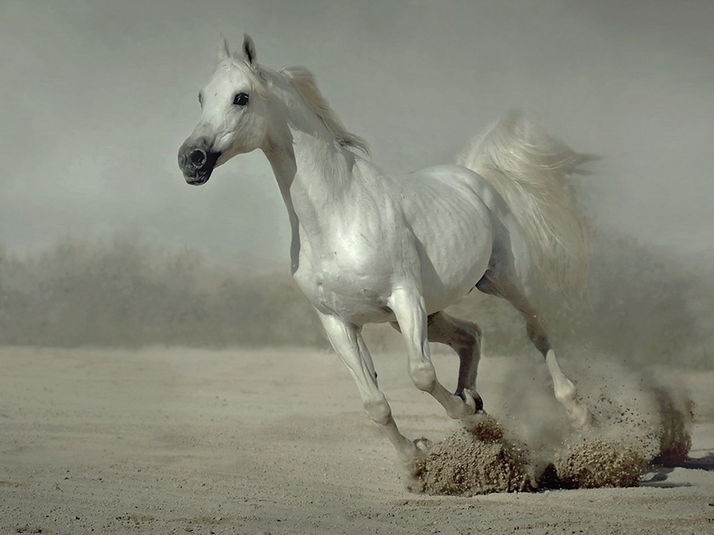 Wonderful   Wallpaper Horse Pinterest - Horse-+(7)  Best Photo Reference_132674.jpg