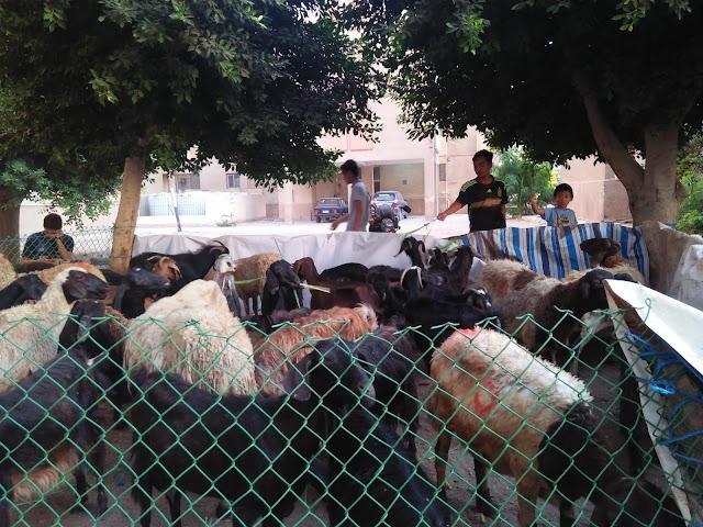 Gotong-Royong Majlis Korban Hari Raya Aidil Adha 2019 - Pelajar Mesir