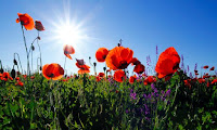 Meadow Flowers - Photo by corina ardeleanu on Unsplash