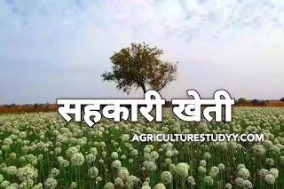 सहकारी खेती या सहकारी कृषि (sahkari kheti/sahkari krishi), सहकारी खेती क्या है यह कितने प्रकार की होती है इसके लाभ एवं दोष लिखिए, Agriculture Studyy
