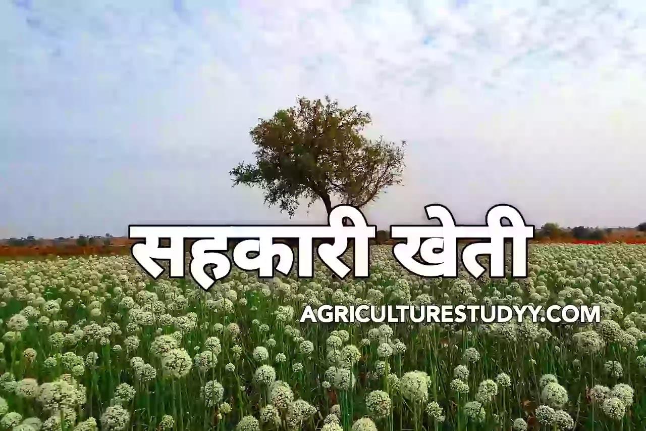 सहकारी खेती, सहकारी कृषि, sahkari kheti, sahkari krishi, सहकारी कृषि क्या है, सहकारी खेती का अर्थ एवं परिभाषा, सहकारी खेती के प्रकार एवं लाभ व दोष,