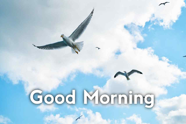 100 Good Morning Images With Birds Download
